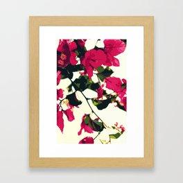 Bugambilia Santa Rita Framed Art Print