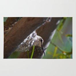 Hummingbird Momma Rug