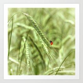Ladybug 39 Art Print