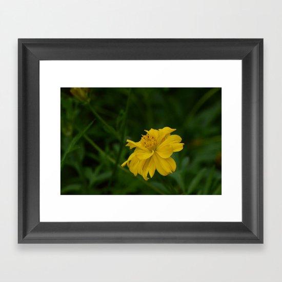 Yellow Summer Flower Framed Art Print