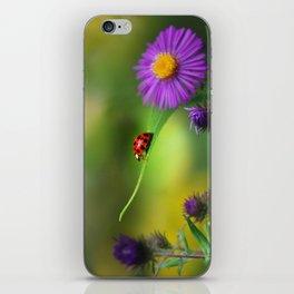 Ladybug In Search iPhone Skin