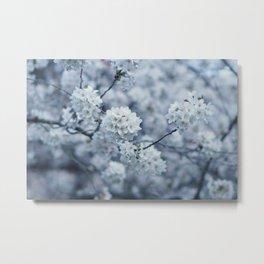 Flower Photography by MissMushroom Metal Print