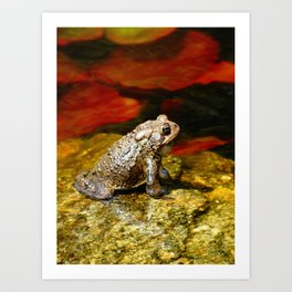 Handsome Toad on Red Lilypad Art Print