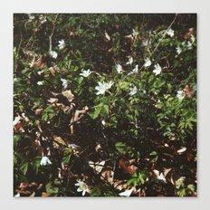 wood anemones Canvas Print