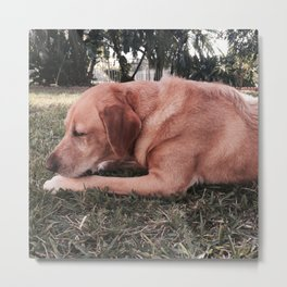 The Golden Pup Metal Print