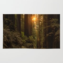 Sunrise in the Redwoods Rug