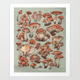 A Series of Mushrooms Art Print