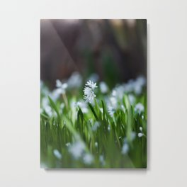 Squill Flowers Metal Print