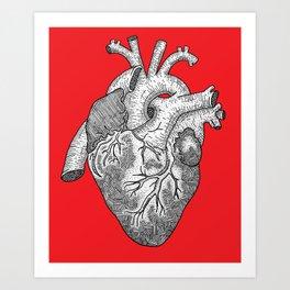 Anatomical Heart Ink Illustration Art Print