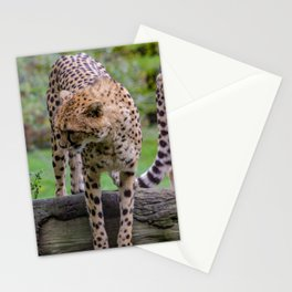 cheetah portrait fine art Stationery Cards
