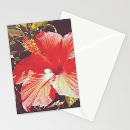 Hibiscus Flower Stationery Cards