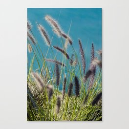 Thin herbs Canvas Print