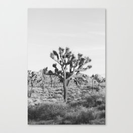 Large Joshua Tree in Black and White Canvas Print