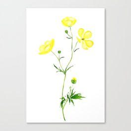 yellow buttercup flower watercolor Canvas Print