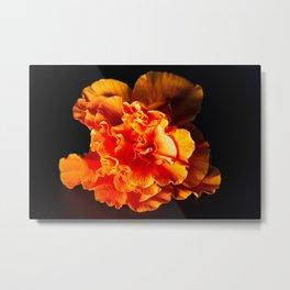 Peach Hibiscus Flower Metal Print