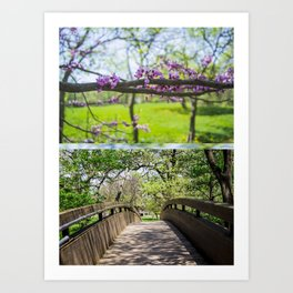 Bridges and Branches Art Print