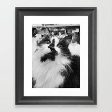 Blott - Kitty Cat I Framed Art Print