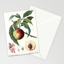 Peach on a branch Stationery Cards