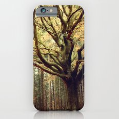 Hêtre de Ponthus 02 - Legendary Trees of Brocéliande iPhone 6s Slim Case
