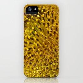 Helianthus annuus (macro) iPhone Case