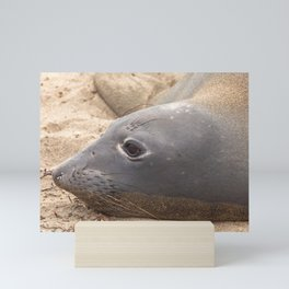 Elephant Seal Mini Art Print