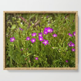 Tiny Wildflowers of Spring by Reay of Light Photography Serving Tray