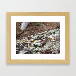 devils tower moss Framed Art Print