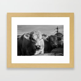 """French Cows Go """"Moo"""" Too! Framed Art Print"""