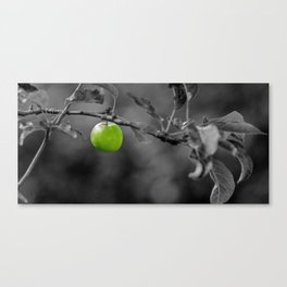 Apple Canvas Print