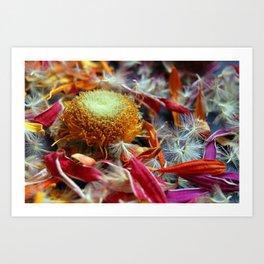 Flower Deconstruction 1 Art Print