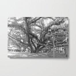 Black and White Banyan Tree Hawaii Metal Print