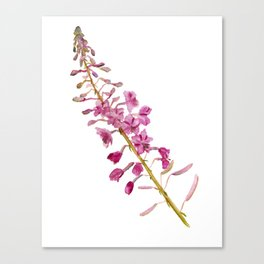 Flowers of fireweed Canvas Print