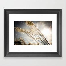 sunlight in the field Framed Art Print