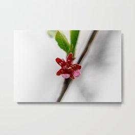 Red peach blossom Metal Print