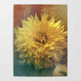Chrysanthemum Beauty Poster