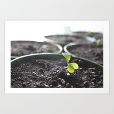 tiny sprout Art Print