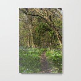 Kears Woodland Walk Metal Print