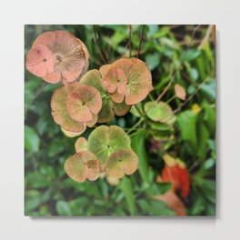 Autumn Kissed Plant Metal Print