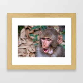 Young Rhesus Macaque with Food in Cheeks Framed Art Print