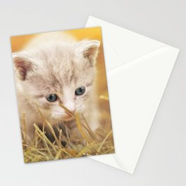 Kitten | Chaton Stationery Cards