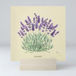 Vintage botanical print - Lavender Mini Art Print