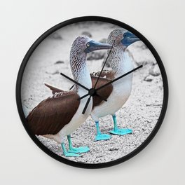 The Blue Footed Booby Wall Clock