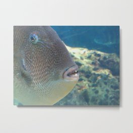 Up close and Personal with a fish with teeth Metal Print