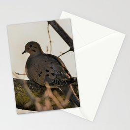 Mourning Dove Stationery Cards