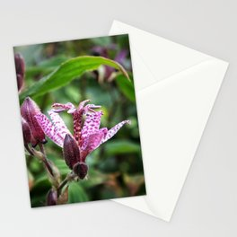 Liliaceae Stationery Cards