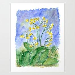Cowslip (Primula veris) Art Print