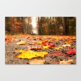 Fall on the Road Canvas Print