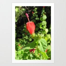 Arboretum Flower- Color Art Print