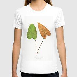 Edward Joseph Lowe - Hemionitis Cordata T-shirt