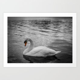 Swan in the Serpentine at Hyde Park Art Print